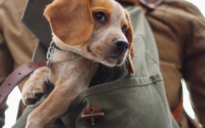 Guía práctica para viajar con perros a Valencia